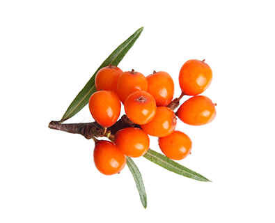 TODA_Herbal_seabuckthorn